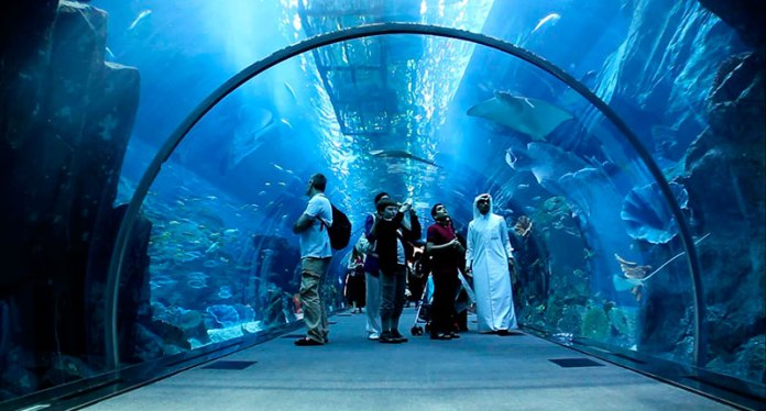 12 - And in aquariums you can see amazing marine fish