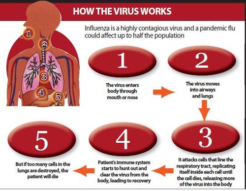 Swine Flu Virus h1n1-how